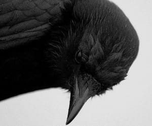 beautiful, crow, and Darkness image