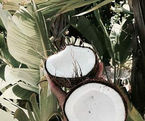 coconut, theme, and tropical image