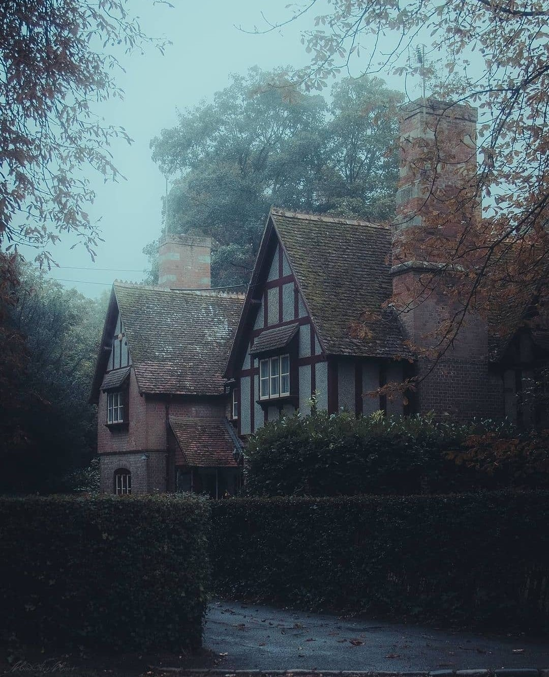 dark, forest, and forest house image