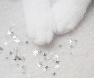 cat, pet, and stars image
