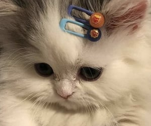 hair clips, kawaii, and kitten image
