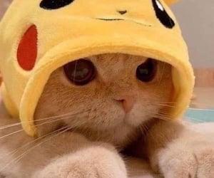 cat, cute cat, and kawaii image