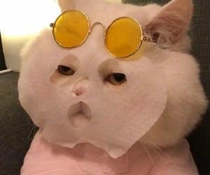 cat, meme, and kitten image