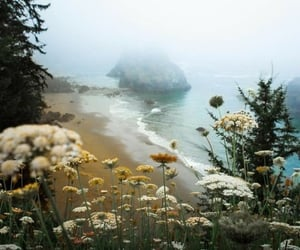 nature, beach, and flowers image