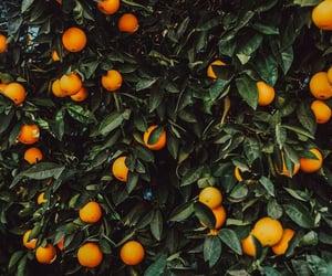 bush, fruit, and image image