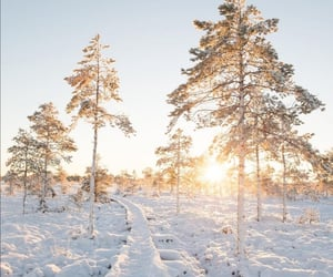 morning, finland, and nature image
