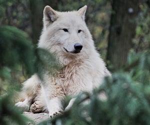 alpha, werewolf, and arctic image