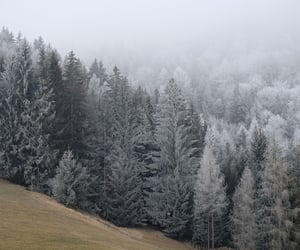 cold, fog, and forest image