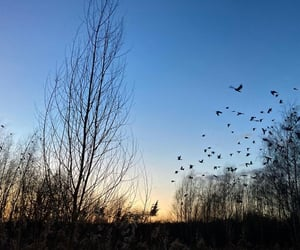 birds, calm, and copenhagen image