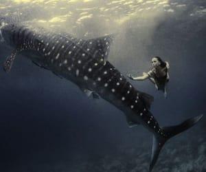 underwater photography image