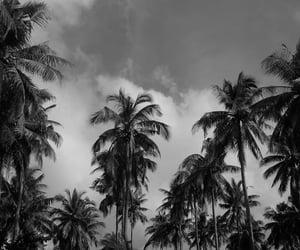 aesthetic, palmtree, and blackandwhite image