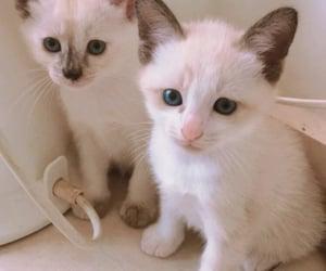 hi, kitten, and loves image