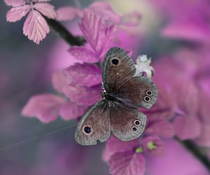 butterfly, plants, and pretty image