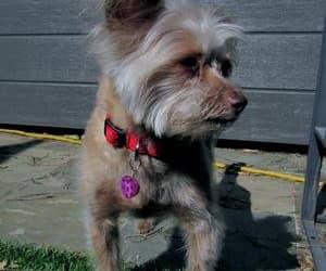 dog charm, pet jewelry, and gemstone charm image