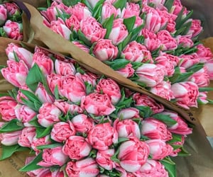 tulips, beautiful, and bouquet image