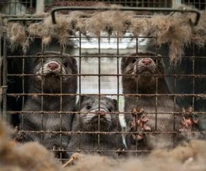 animals, fur, and glamorous image