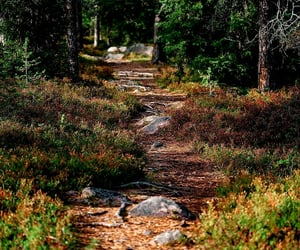 amazing, beautiful, and finland image