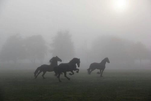 horse, black, and dark image