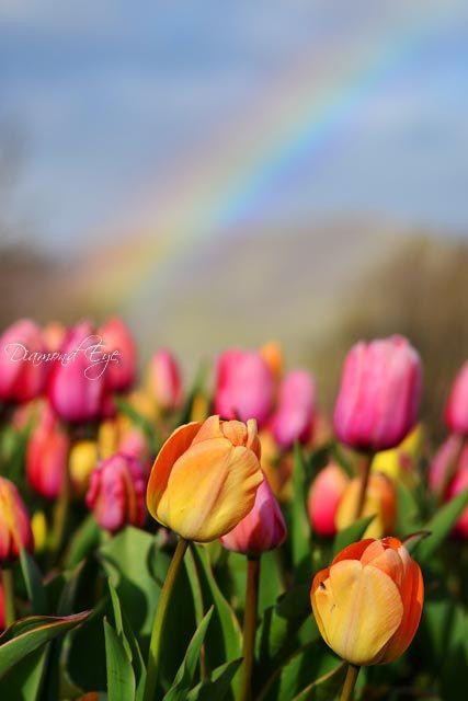 flowers, rainbow, and scenery image