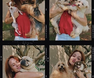 dogs, redhead, and puppies image