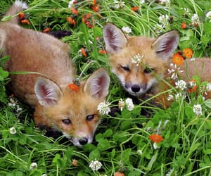 fox, cute, and flowercore image