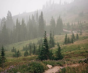 fairytale, fog, and forest image