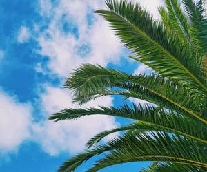 mar, palmera, and naturaleza image