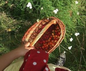 FRUiTS, picking fruit, and yummy image