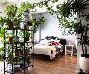 decor, greenery, and garden image