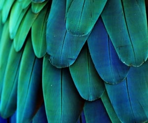 bird, feathers, and wing image