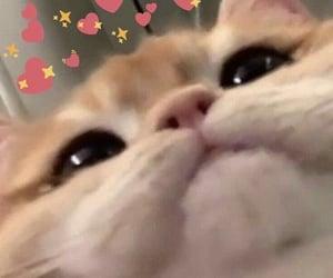 cat, meme, and cute image