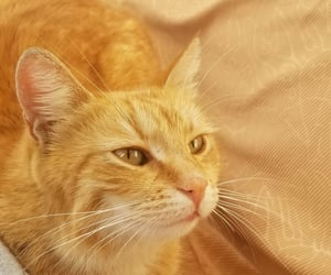 eyes, animals, and cat image