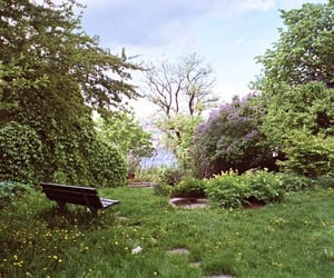 bench, nature, and photography image