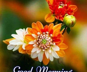 flowers, morning, and sweet image