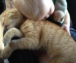 cat and baby image