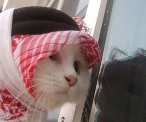 cute cat kitten arab image