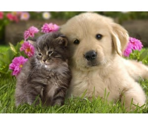 animals, kitten, and puppy image
