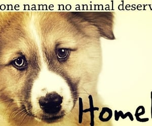 animal, homeless, and quotes image