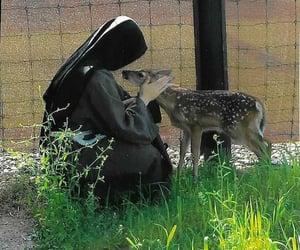 animals, nature, and nuns image