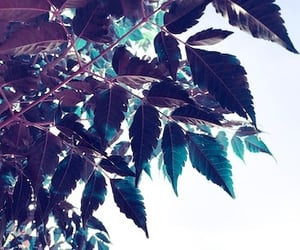close up, green, and image image
