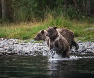 Alaskan grizzly by Gary Randall