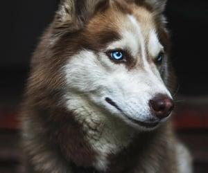 animal, dog, and aww image