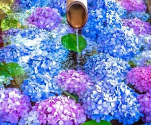 asia, japan, and blue flowers image