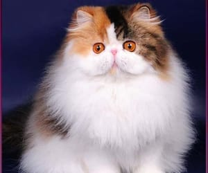 cat, cats, and cute cat image