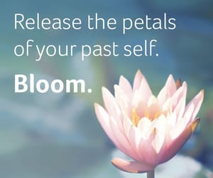 bloom, evolve, and grow image