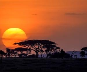 Masai Mara, nairobi, and day trip image