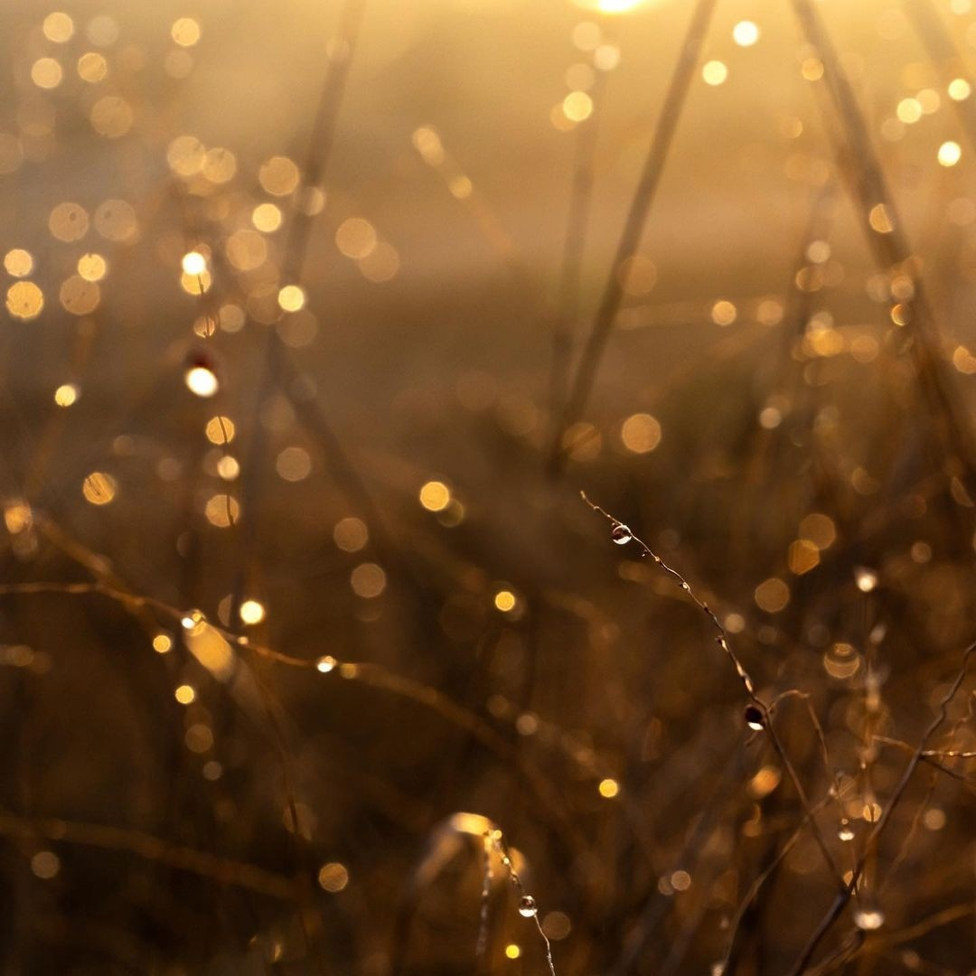 beautiful, gold, and grass image
