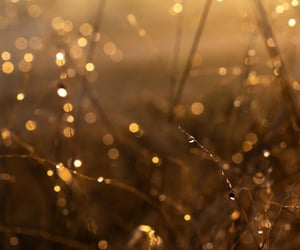 beautiful, nature, and gold image