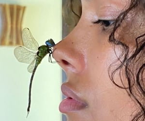 beautiful, face, and insect image