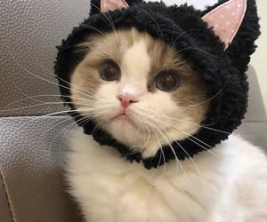 pfp, cat, and cute cat image